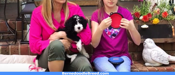 How to Take care of my Bernedoodle