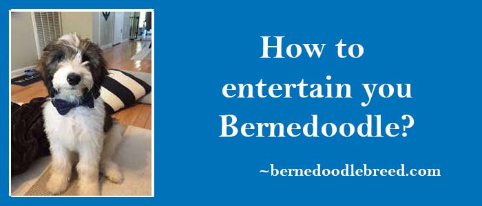 How to enteertain you Berndoodle