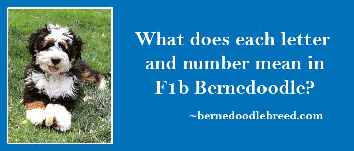 What does each letter and number mean in F1b Bernedoodle?  There are two different letters and a number F1b