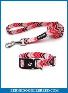 azuza Dog Collar and Leash Set