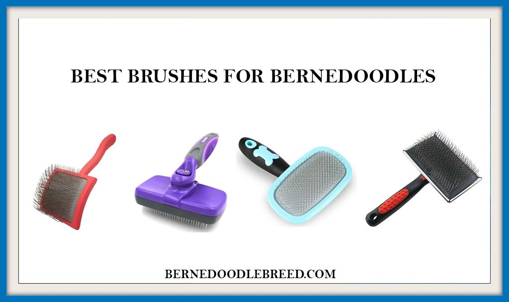 BEST BRUSHES FOR BERNEDOODLES