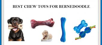 The 6 Best Chew Toys for Bernedoodle Dog? Expert Reviews & Buyer's Guide
