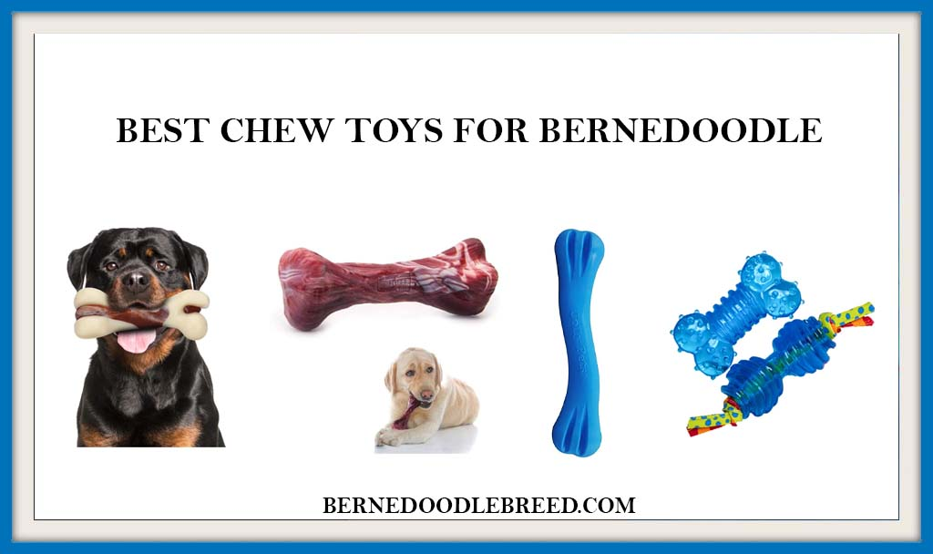 BEST CHEW TOYS FOR BERNEDOODLE