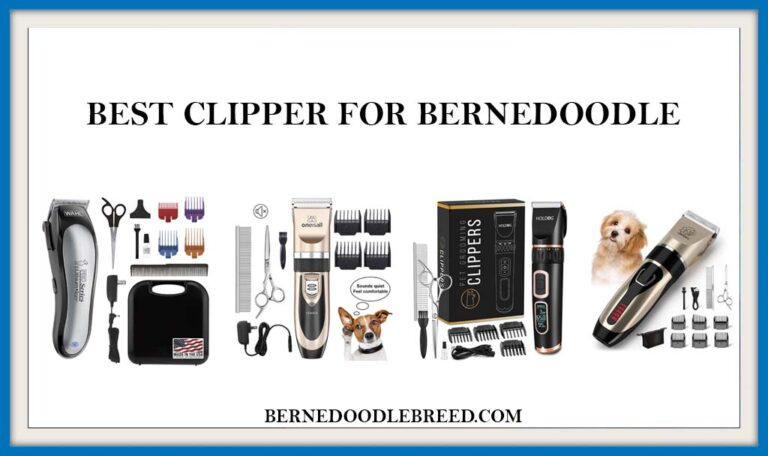 The 6 Best Clippers for Bernedoodle Dog? Expert Reviews & Buyer's Guide