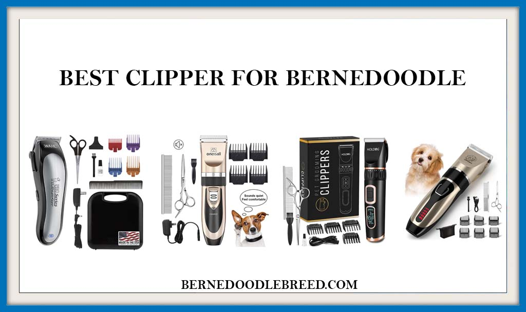 BEST CLIPPER FOR BERNEDOODLE