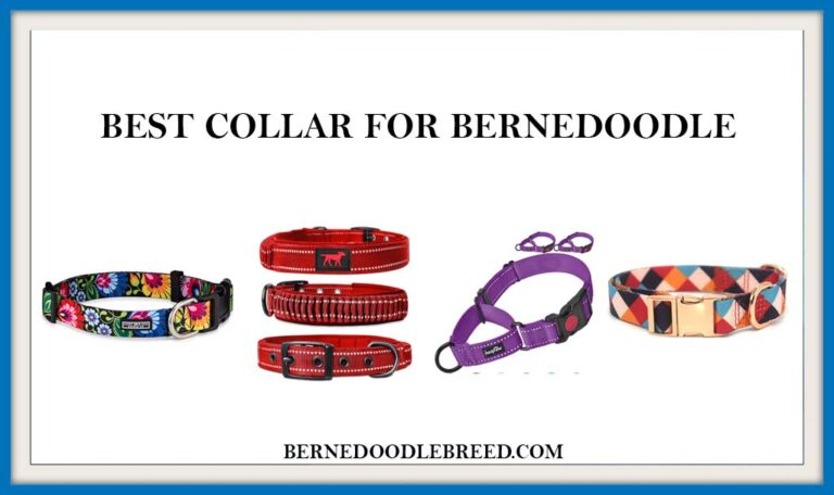 The 6 Best collar for Bernedoodle? Expert Reviews & Buyer's Guide