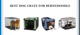The 6 Best dog Crate for Bernedoodle? Expert Reviews & Buyer's Guide