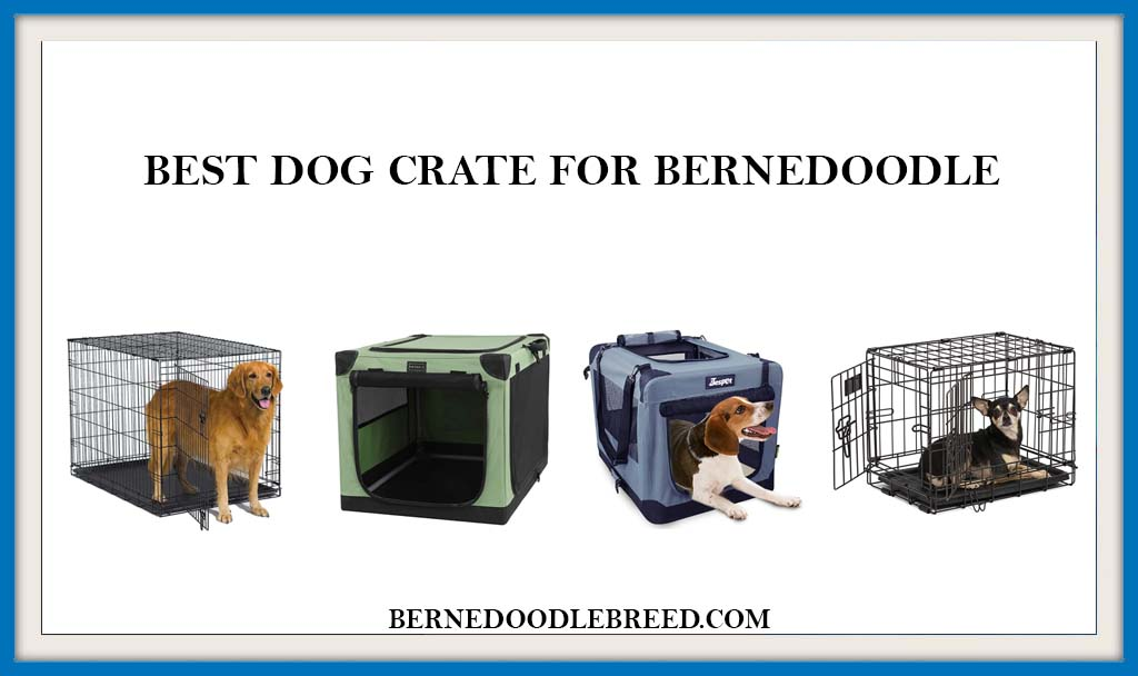 BEST DOG CRATE FOR BERNEDOODLE