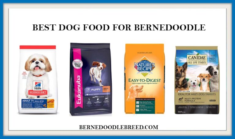 The 6 Best Dog food for Bernedoodle 2021 Expert Reviews & Buyer Guide
