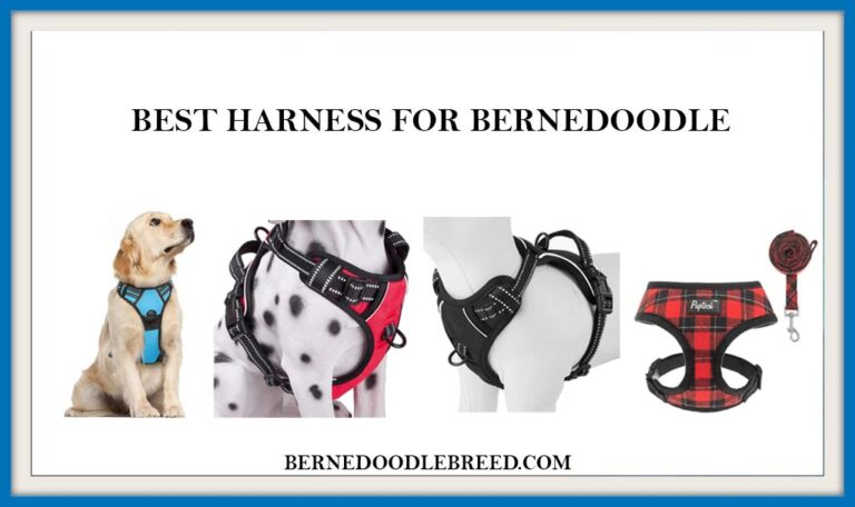 The 6 Best harness for Bernedoodle? Expert Reviews & Buyer's Guide