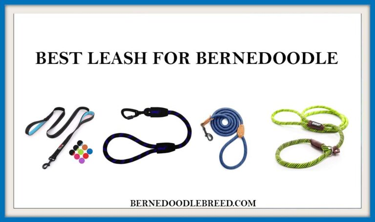 The 6 Best Leash for Bernedoodle? Expert Reviews & Buyer's Guide
