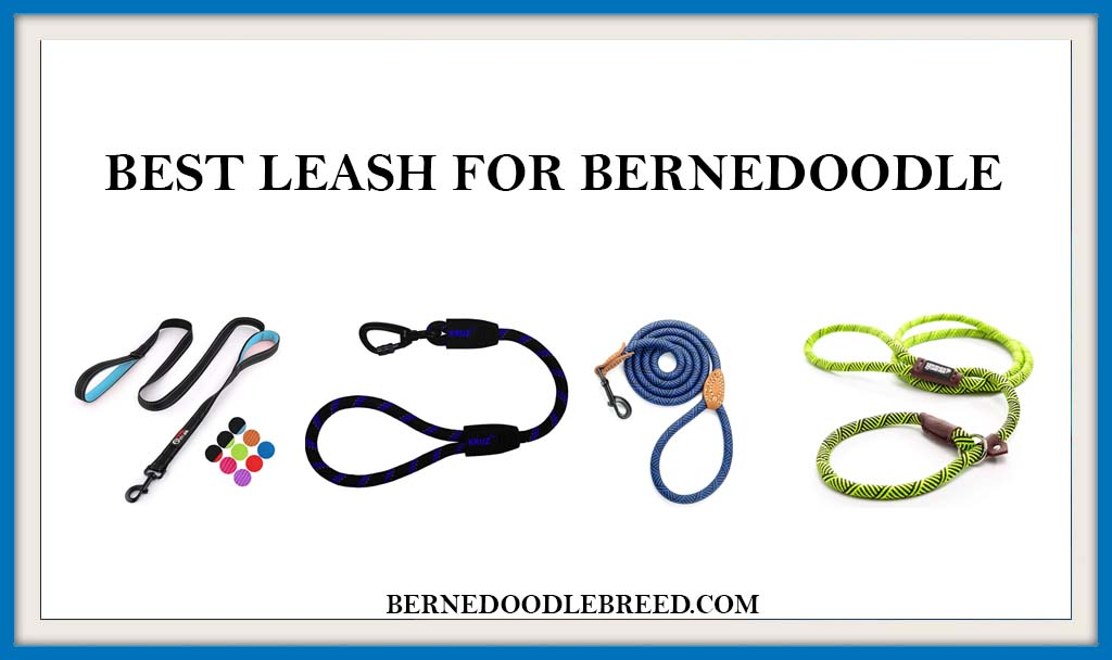 BEST LEASH FOR BERNEDOODLE