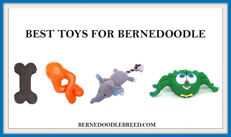 The 6 Best toys for Bernedoodle? Expert Reviews & Buyer's Guide