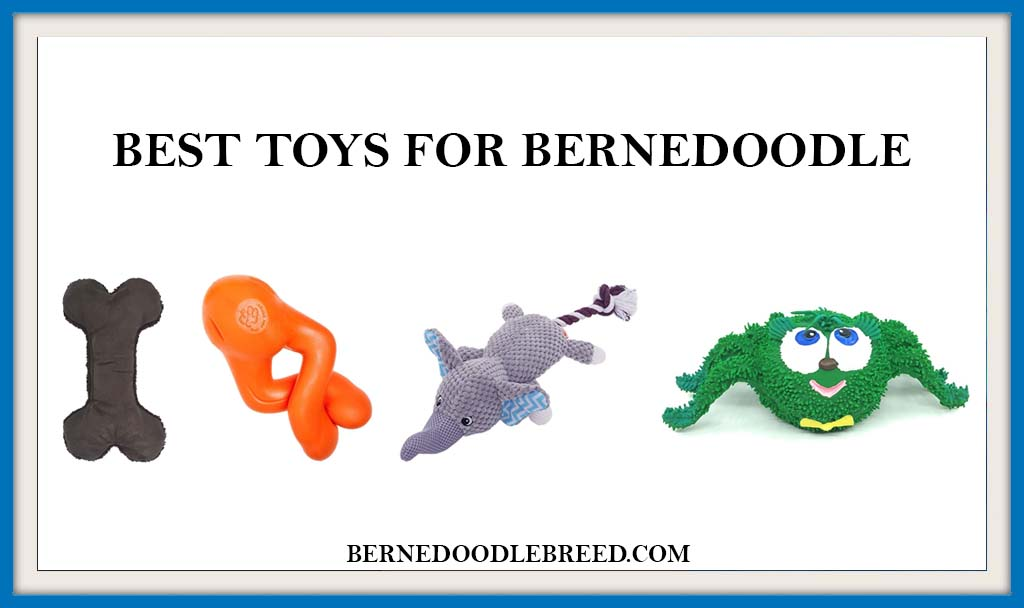 BEST TOYS FOR BERNEDOODLES