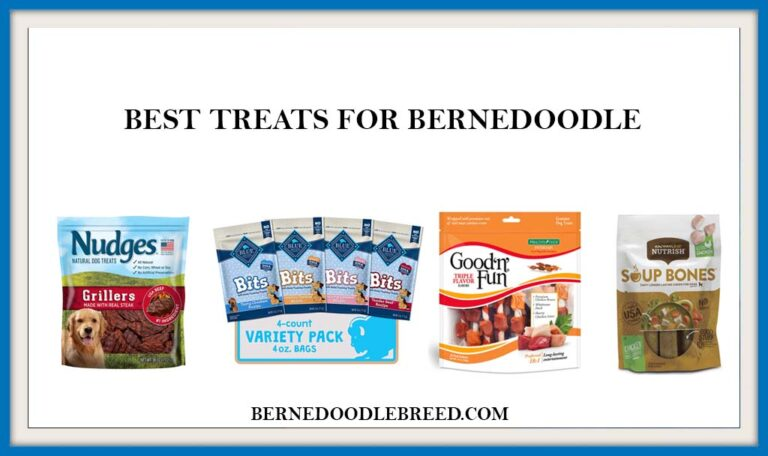 The 6 Best Treats for Bernedoodle Dog ? Expert Reviews & Buyer's Guide